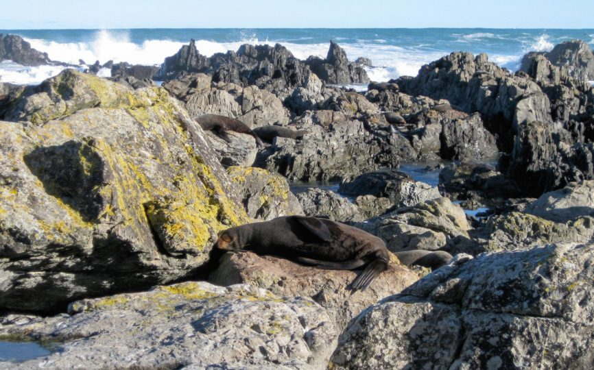 In Search of Seals: Hiking to Sinclair Head in Wellington
