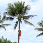 Does it Have to be Authentic to be Educational? – Hawaii's Polynesian Cultural Center