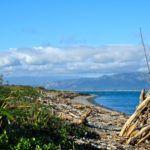 Conservation on Kapiti Island