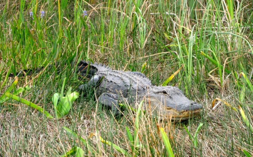 Up Close With Dinosaurs in the Everglades