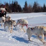 Dogsledding in the Great White North