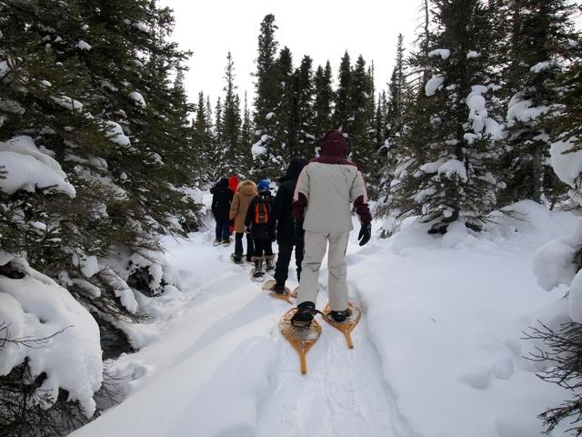 A Tundra Education