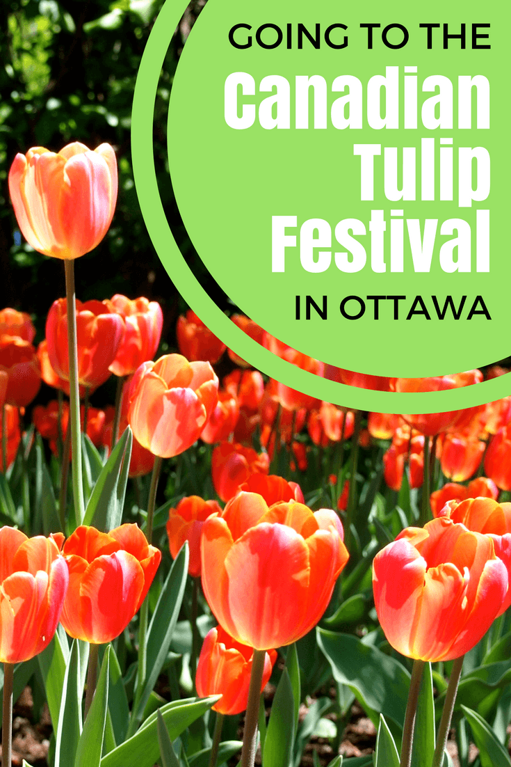 Going to the Canadian Tulip Festival in Ottawa