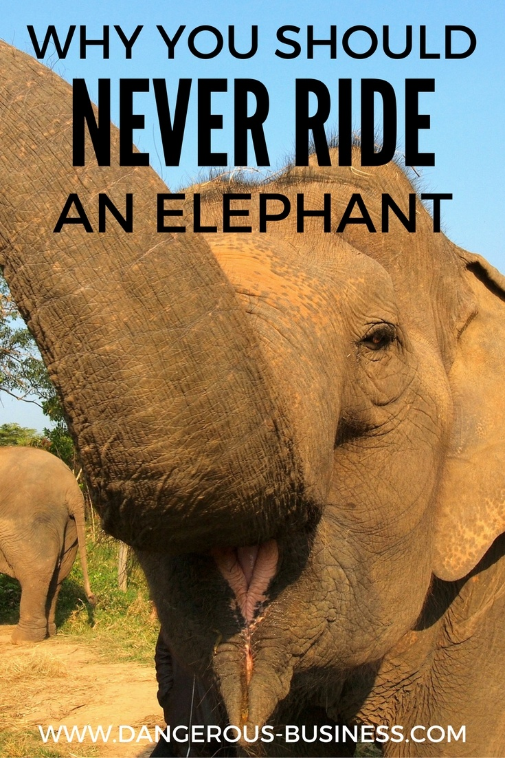 Why you shouldn't ride an elephant