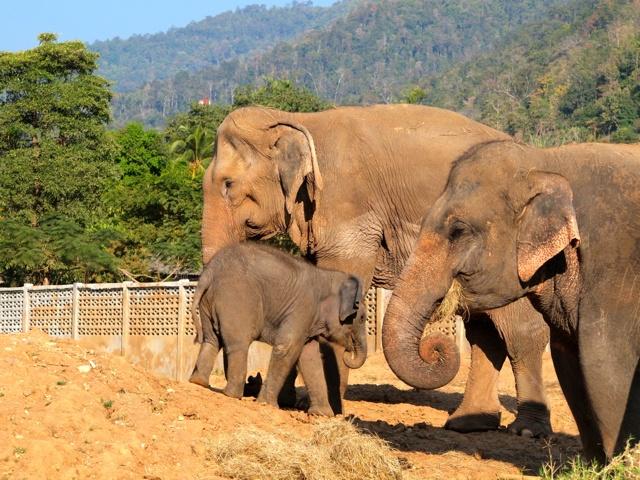 Please Don't Ride the Elephants