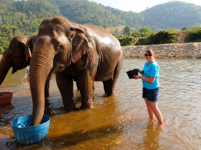 Volunteering at Elephant Nature Park