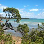 A Day Trip to Waiheke Island