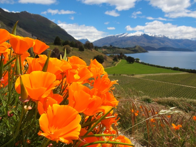 6 Reasons You Shouldn't Skip Wanaka