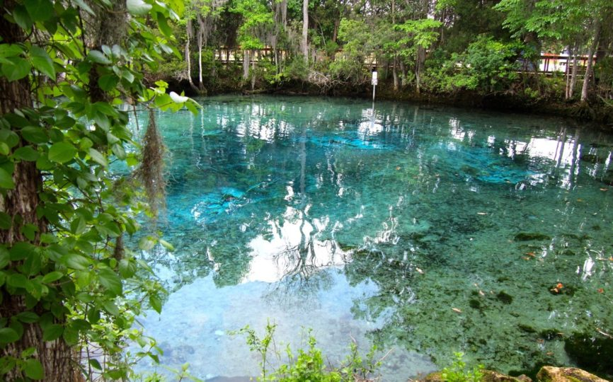 5 Awesome Things to do in Crystal River, Florida
