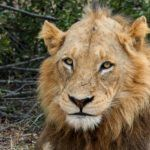 A Big 5 Safari in Kruger National Park