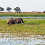 Enchanted by Chobe National Park in Botswana