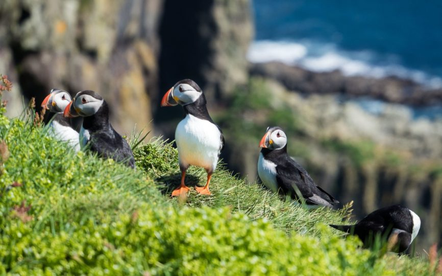 Love Puffins? Go to Mykines