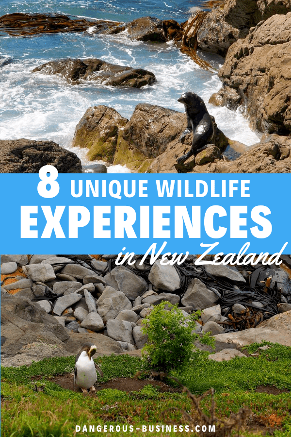 Unique wildlife experiences in New Zealand