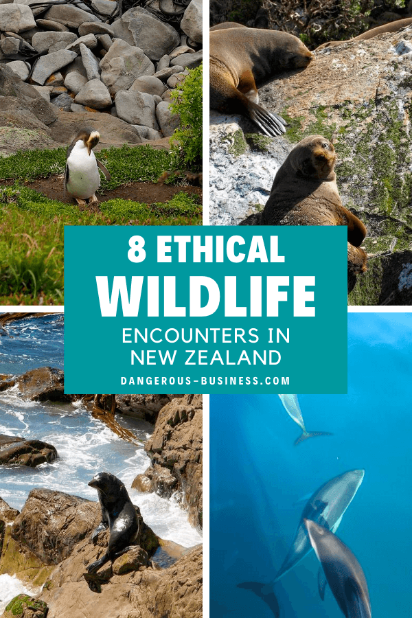 Ethical wildlife experiences in New Zealand